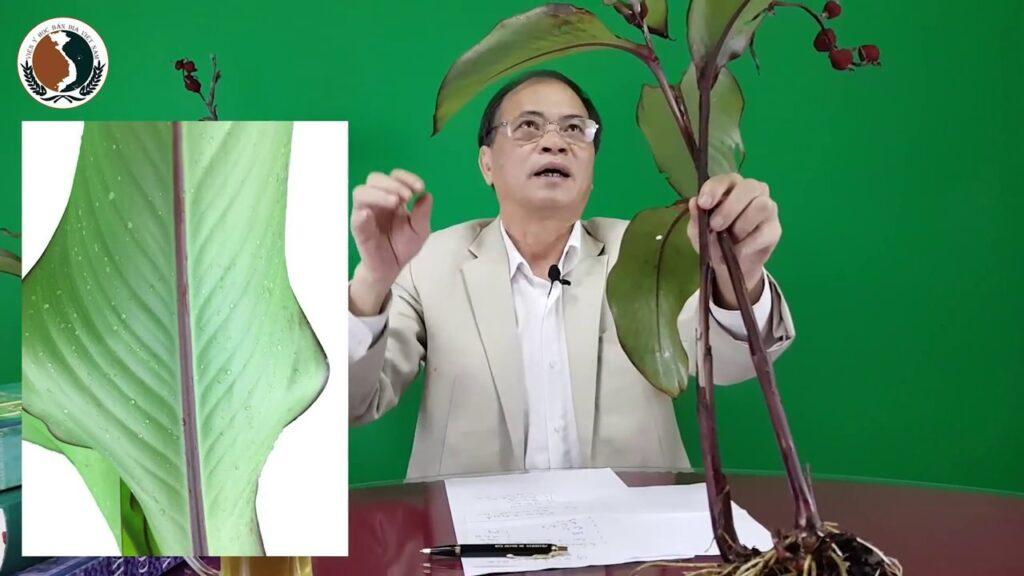 Viện Y học bản địa Việt Nam dong rieng do |TOPMOST.VN