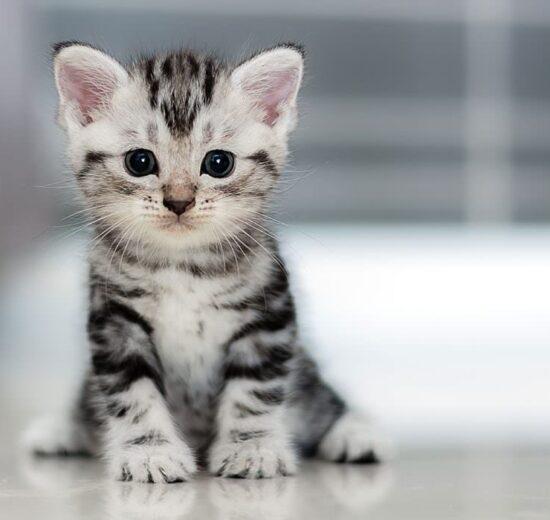 thú cưng Adorable Pets for Kids |TOPMOST.VN